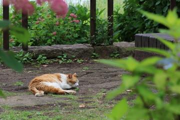 公園でお昼寝中のネコちゃん
