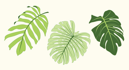 Tropical Leaf Vector Illustration Element Set