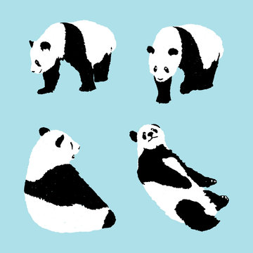 set of panda on blue background, wildlife animal vector illustration