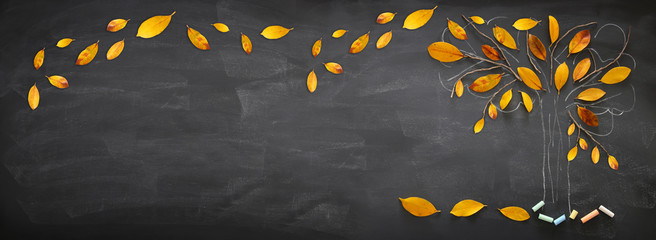 Back to school concept. Top view banner of tree sketch with autumn dry leaves over classroom blackboard background.