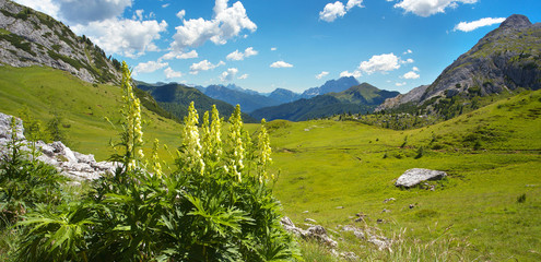 Landscape in Dolomites with a cluster of foxglove on the foreground, Italy