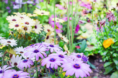Outdoor Bright Spring Flowers In Nature Background Summer Flowers