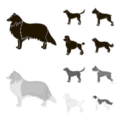 Collie, labrador, boxer, poodle. Dog breeds set collection icons in black,monochrom style vector symbol stock illustration web.