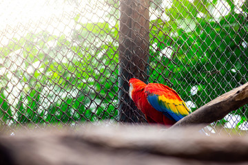 Parrot of colorful beautiful bird