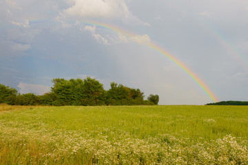 bright rainbow in the sky above the green field