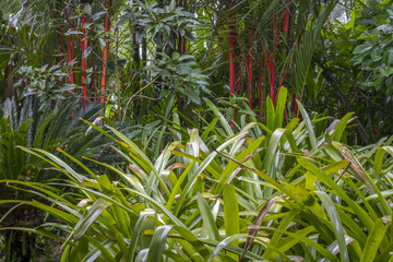 Thick jungle plants in green and red colors