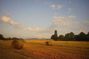 Fototapete - Paysage Campagne 316