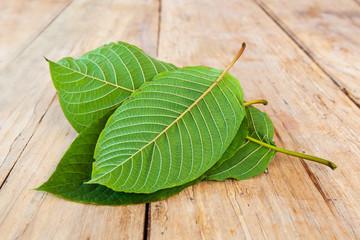 Fresh kratom leaves.