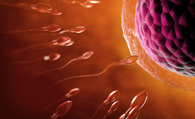 3d illustration of transparent sperm cells swimming towards egg cell