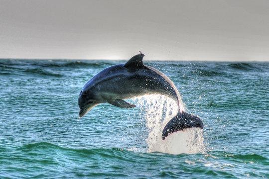 Dolphin in St Andrews St Park, Panama CIty Beach, Fl