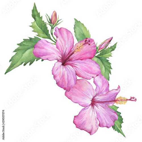 Composition with tropical pink flowers of hibiscus also known as composition with tropical pink flowers of hibiscus also known as rose of althea or sharon mightylinksfo