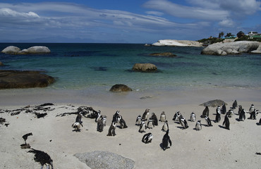 Boulders beach penguins, South Africa
