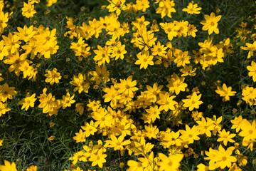 Yellow flowers on dark green