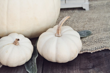 Heirloom and mini white pumpkins sitting on wooden rustic table decorated for Thanksgiving Day or Halloween.