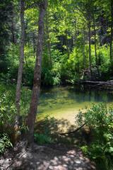 Peaceful, Lush Carlon Creek Scene in a Yosemite Forest