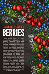 Vector sketch poster of natural forest berries