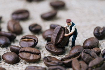 Miniature people figurine coffee professional worker holding roasted coffee bean on gunny bag, selecting best aroma quality for manufacture production