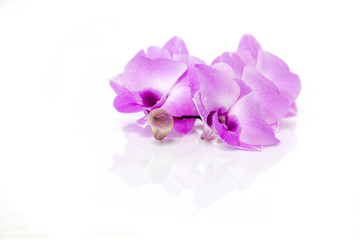 Rattan Orchid, beautiful orchid flowers on white background