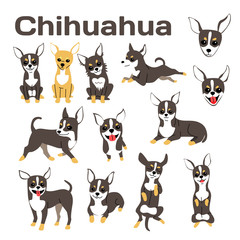 chihuahua,dog in action,happy dog