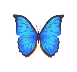 Butterfly of Blue Color Poster Vector Illustration