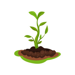 Young sprout with bright green leaves in the ground. Gardening and cultivation theme. Flat vector for infographic poster
