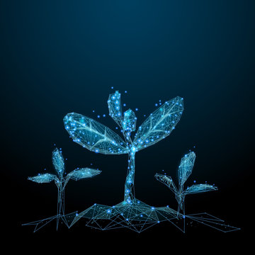 Seedling. Low poly blue. Polygonal abstract health illustration. In the form of a starry sky or space. Vector image in RGB Color mode.