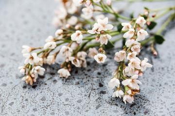 flower consept