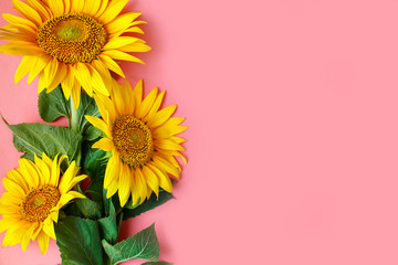 Wall Mural - Beautiful sunflowers on pink background. View from above. Background with copy space.