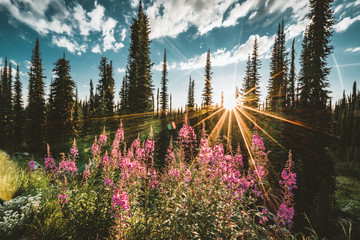 Lake on the summit of Mount Revelstoke sunset reflection sunstar across forest with blue sky and clouds. British Columbia Canada. Wall mural