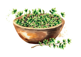 Kitchen herb Thyme. Bowl with green leaves. Hand drawn watercolor illustration isolated on white background