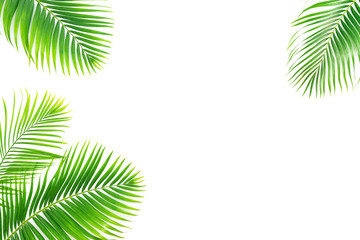 Palm leaves isolated on white background.