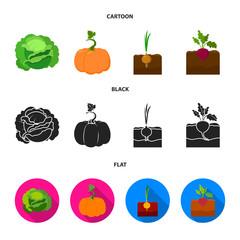 Cabbage, pumpkin, onion, buriak.Plant set collection icons in cartoon,black,flat style vector symbol stock illustration web.