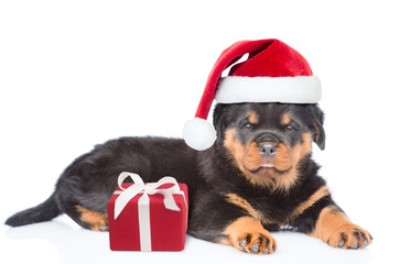 Little rottweiler puppy in red christmas hat lying with gift box. Isolated on white background
