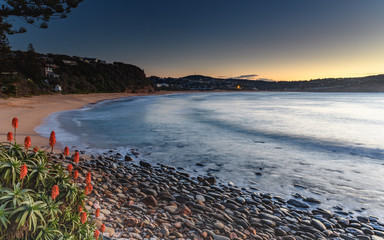 Sunrise Seascape and Aloe Vera in Flower
