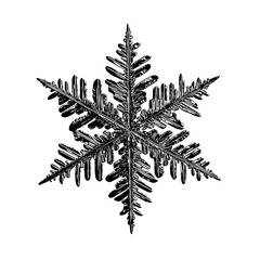 Black snowflake on white background. This illustration based on real snow crystal macro photo: large stellar dendrite with fine hexagonal symmetry, complex structure and elegant shape.