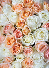 Stylish photo of light pink and white roses background, beautiful flowers bouquet.