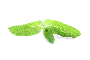 Fresh green mint on white background