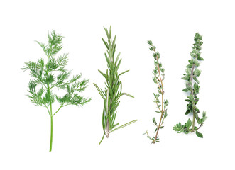 Fresh herbs on white background