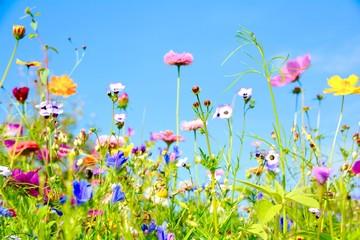 Wall Mural - Blumenwiese - Sommerblumen - Wildblumen