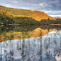 Autumn reflections and reeds at Loch Ard near Aberfoyle