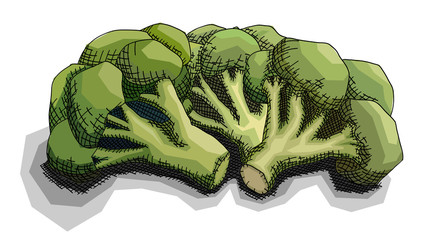 Vector illustration of drawing bunch of broccoli.