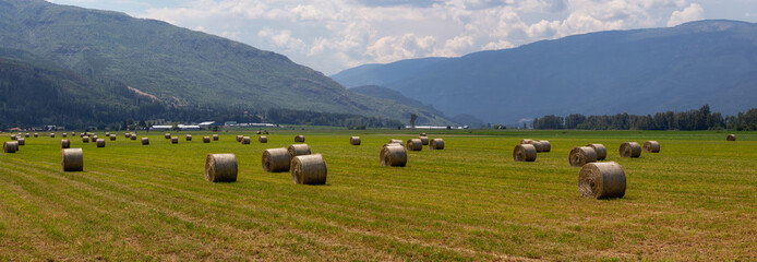 Haystack in a farm field during a vibrant sunny summer day. Taken in Salmon Arm, British Columbia, Canada.