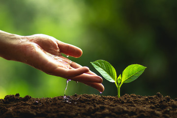 Plant a tree Natural tree Green backgroun seedlings in nature