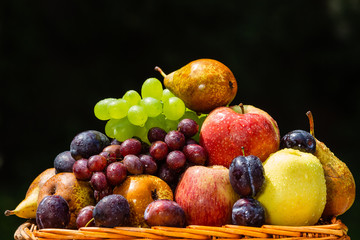 Fruit in the garden - apples, pears, plums and grapes