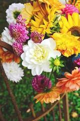Fototapete - Blumenstrauß - Dahlien - Grußkarte