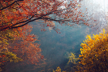 nature autumn sunshine leaves yellow forest morning colorful sun rays branches trees air