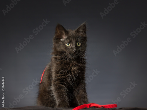 Gatto Nero Nastro Rosso Stock Photo And Royalty Free Images On