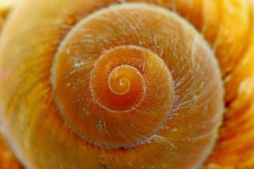 Meeresschnecke mit spiralförmigen Gehäuse