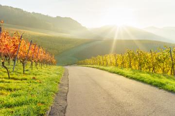 Sonnenaufgang im herbstlichen Weinberg