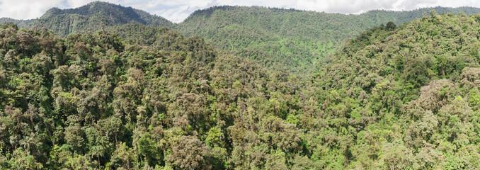 Search Photos Rain Forest